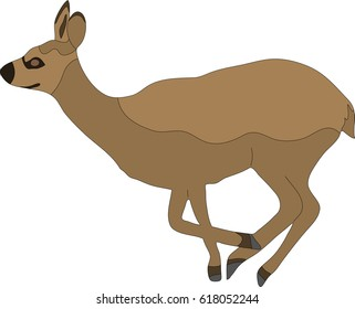 hand drawn portrait of a wild klipspringer antelope - colored vector Illustration isolated on white background