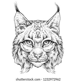 Hand drawn portrait of wild Lynx . Vector illustration isolated on white