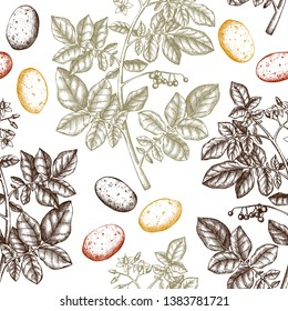 Hand drawn Potato background. Botanical seamless pattern. Agricultural plant drawing. Vegan and healthy food. Great for packaging, label, icon. Lineart. Vector potato outlines.
