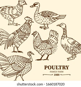 Hand drawn poultry background. Domestic birds decorative composition. Vector chicken, rooster, duck, goose, turkey isolated on light background. Vintage ink drawing style.