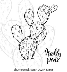 Hand drawn prickly pear, Opuntia ficus-indica, sketch style vector illustration isolated on white background. Wild floral exotic tropical plant. Black and white of opuntia cactus, side view.