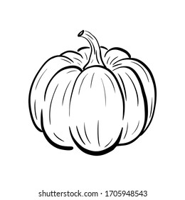 Hand drawn pumpkin sketch. Ripe squash isolated on white background. Linear art of healthy organic vegetable in cartoon style. Ink drawing. Vector illustration for menu, farmers markets, print.