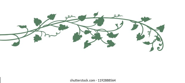 hand drawn pumpkin vine leaves and plant in green isolated on white background with cute curls, garden and autumn design element