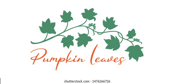 hand drawn pumpkin vine leaves and plant in green isolated on white background, garden vector design element