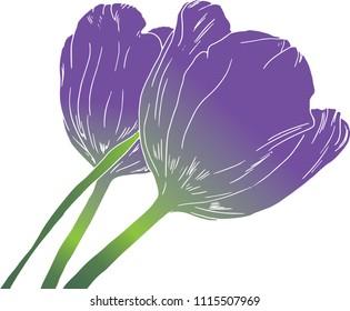 Hand drawn, purple, vector tulips