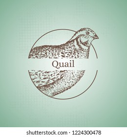 """Hand drawn quail sign. Engraving style. Stamp idea. Isolated on background. Vector. """"Quail"""" phrase."""