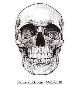 Hand drawn realistic skull. Dotted technique. Vector template design