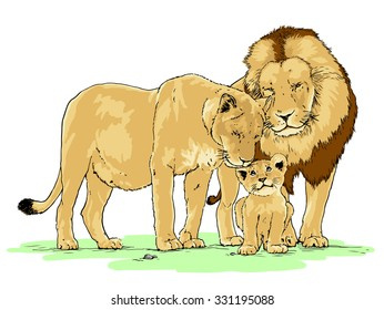 Hand drawn realistic vector illustration of a family of lions, isolated on white background