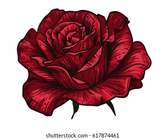 Hand drawn red rose on green background / Vector illustration / Vintage tattoo style rose