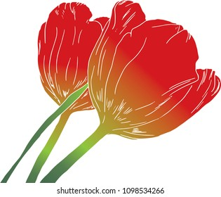 Hand Drawn Red Tulips Vector