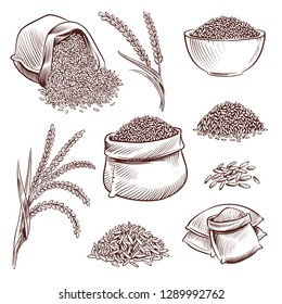 Hand drawn rice. Doodle sack and. Sketch rice ears vector set