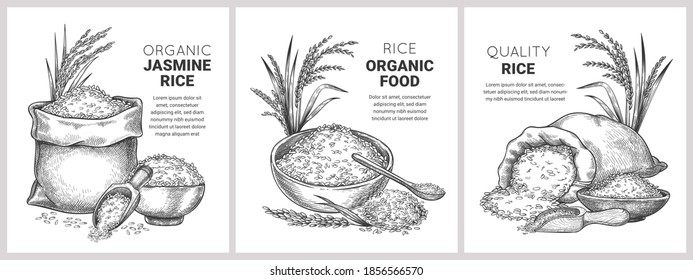 Hand drawn rice label. Retro sketch organic cereal grains in bag and bowl. Farm basmati wild jasmine rice. Vector flour packages concept. Illustration basmati organic rice, nutrition uncooked banner