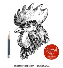 Hand drawn rooster head vector illustration. Sketch chicken portrait isolated on white background with pencil and label banner. Symbol of new year 2017