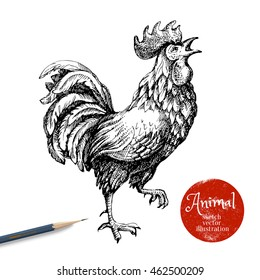 Hand drawn rooster vector illustration. Sketch chicken isolated on white background with pencil and label banner. Symbol of new year 2017