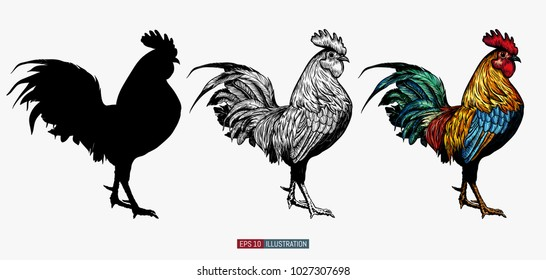 Hand drawn roosters set.  Engraved style vector illustration. Template for your design works.