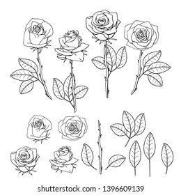 hand drawn rose flower. floral design element isolated on white background. stock vector illustration.