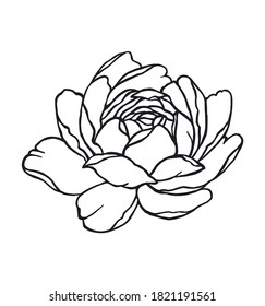 Hand drawn rose flower.Vector black outline peony drawing silhouette floral tattoo illustration isolated on white background.Logo icon.Wall vinyl decal sticker design.