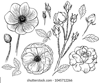 Hand drawn roses flower, anemone isolated on white background. Set of elements. Vector illustration. Perfect for invitation, greeting card, fashion print, poster for textiles, design, coloring book.