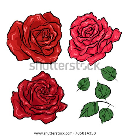 Hand Drawn Roses Leaves Isolated On Stock Vector Royalty Free