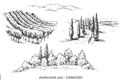 Hand drawn rural scene fragments with vineyard, hills, road and trees. Monochrome rustic landscape illustration. Vector sketch.