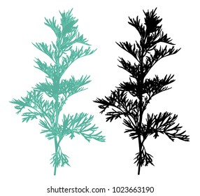 Hand drawn sagebrush silhouette isolated on white background. Elegant wild plants for your design. Vector illustration.