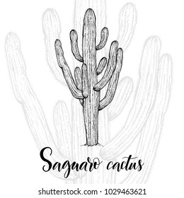 Hand drawn saguaro cactus, sketch style vector illustration isolated on white background. Wild floral exotic tropical plant. Black and white of saguaro cactus, side view.