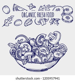 Hand drawn salad bowl and vegetables - ballpoint pen sketch healhty food vector illustration