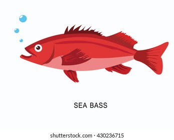 Hand drawn sea bass. The design of fish in a flat style. Vector illustration