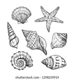 Hand drawn sea shells. Starfish shellfish tropical mollusk in vintage engraving style. Seashell isolated vector collection. Illustration of shellfish and starfish drawing
