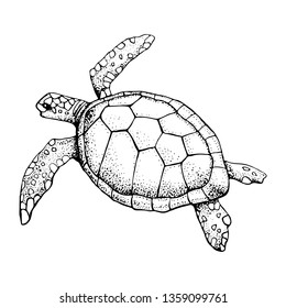 Hand drawn Sea turtle isolated on a white background. Vector with animal underwater. Illustration for T-shirt graphics, fashion print, poster, textiles.