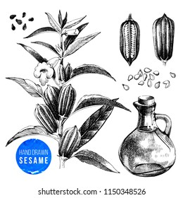 Hand drawn sesame set - plant, seeds and oil. Vector illustration in vintage style