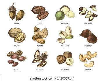 Hand drawn set of 12 edible nuts