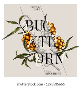 Hand drawn set of beauty product label design. Vector sea buckthorn cosmetic. Typography template. Engraved art. Essential oils, medicine, treating, aromatherapy, package design, health care.