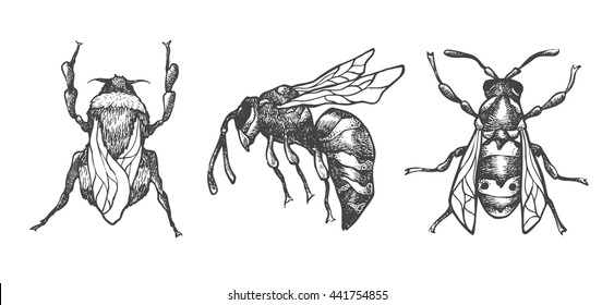 Hand drawn set of bees and bumblebee in different poses. Set of isolated vector insects illustrations. Black and white collection. Detailed realistic sketches. Ink, pen, linework.
