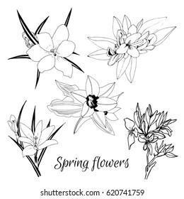Hand drawn set contour spring flowers. Vector illustration.