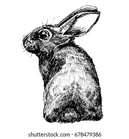 Hand Drawn Set for Design, Website, Background, Banner. Ink cute hare sketch.