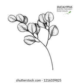 Hand drawn set of essential oils. Vector eucalyptus branch. Winter medicinal herb. Christmas, Xmas. Engraved art. Good for cosmetics, medicine, treating, healthcare, package design, aromatherapy.