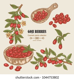 Hand drawn set of Goji berries. Colored sketch goji. Vector illustration vintage.