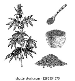 Hand drawn set with hemp leaf cannabis fiber cloth and rope. Isolated sketch of marijuana. Black and white graphic design. Vintage vector illustration.