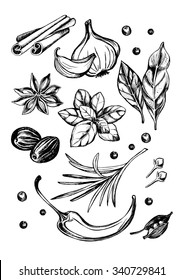 Hand drawn set of herbs and spices - garlic, hot pepper, cardamom, bay leaf, basil, nutmeg, cloves, rosemary, black pepper, cinnamon sticks and star anise. Vector Illustration.