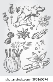 Hand drawn set of herbs and spices - poppy, ginger root, cardamom, coriander, nutmeg, star anise, cinnamon sticks, fennel, cloves, black pepper, cumin, vanilla pods with a flower. Vector Illustration.
