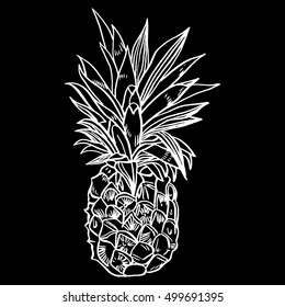Hand drawn set illustrations of ripe pineapples. Exotic tropical fruit vector drawings isolated on white background.