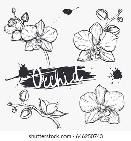 hand drawn set illustrations silhouette of orchid. sketch. vector eps 8