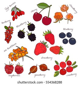 Hand drawn set of juicy berries. Cranberry,cloud berry,Goji berries, strawberry,blackberry, blueberry, goose berry, barberry