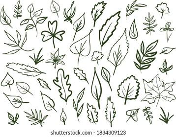 Hand drawn set of leaves. Vector illustration. Doodle lines, frame elements.