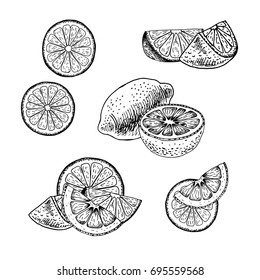 Hand drawn set of lemon. Retro isolated sketches. Vintage collection. Linear graphic design. Slices of lemon. Black and white image of fruit. Vector illustration.