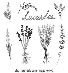 Hand drawn set of outline doodle vector illustrations of lavender