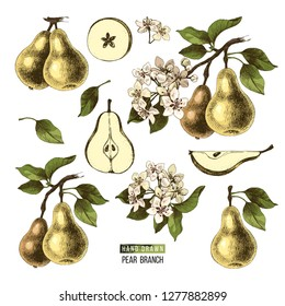 Hand drawn set of pears - branches, fruits, flowers and pieces. Vector illustration