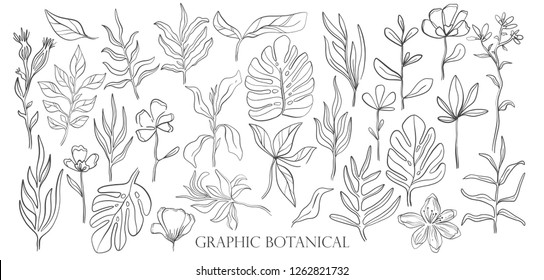 Hand drawn set sketch style Wild flowers . Line nature style,Drawing flora,hand drawn botany. Vector illustration.