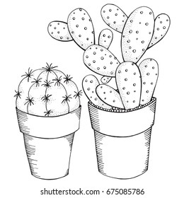 Succulent Coloring Page Hd Stock Images Shutterstock